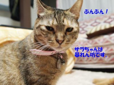 s-PB069260_20101106230300.jpg