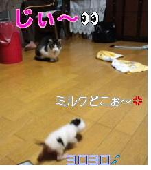 10_20111115140834.jpg