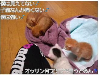 8_20111115134526.jpg