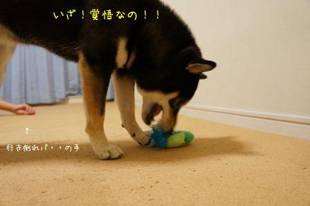 おもちゃで遊ぶ凜ちん