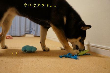 おもちゃで遊ぶ凜ちん①