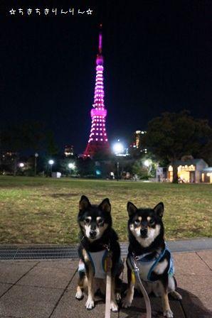 ピンクライトアップ東京タワー⑤