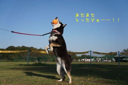 道満パーク⑤