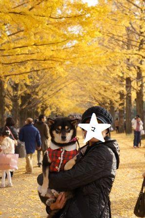 昭和記念公園⑥