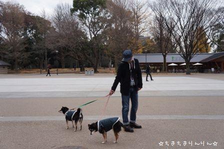 パンダ散歩④