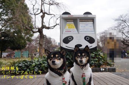 パンダ散歩①