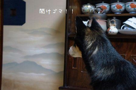 開けごま!④
