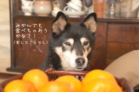 食いしん坊ちき①