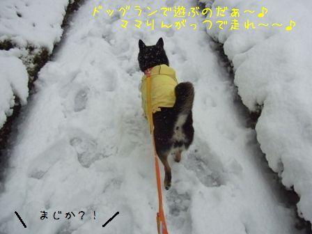 雪~りん①