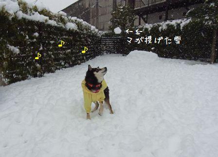 雪~りん②