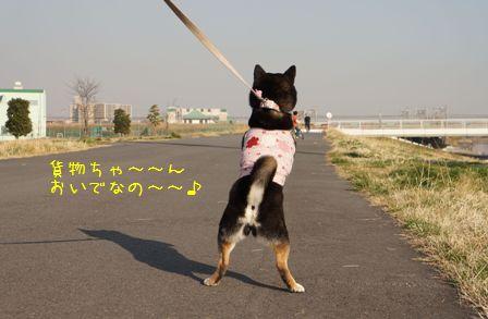 土手散歩②