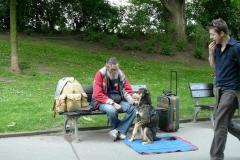 プラハの置物犬1