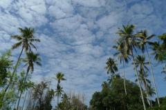 ザンジバル島4