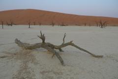 ソススフレイのナミブ砂漠2