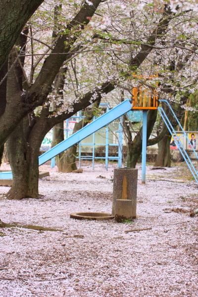 桜色の絨毯