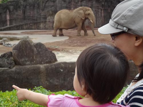 やま子と象