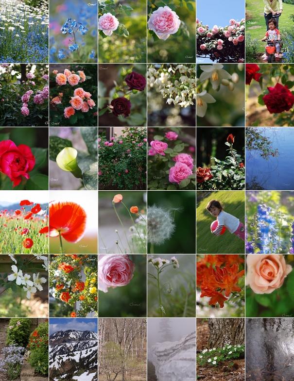 月ごとの花