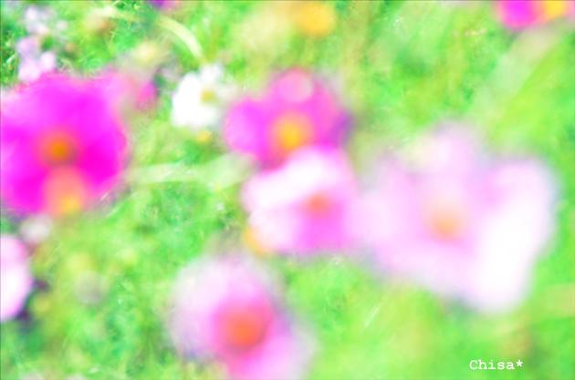 25b_20120926115429.jpg