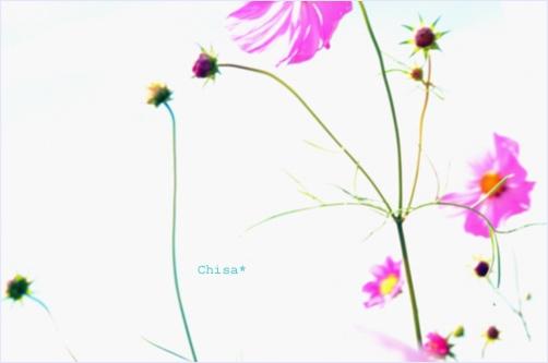 25c_20120926115648.jpg