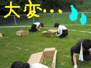 草むしり2