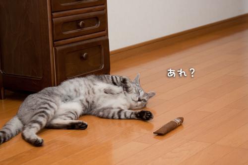 どこいったかな?