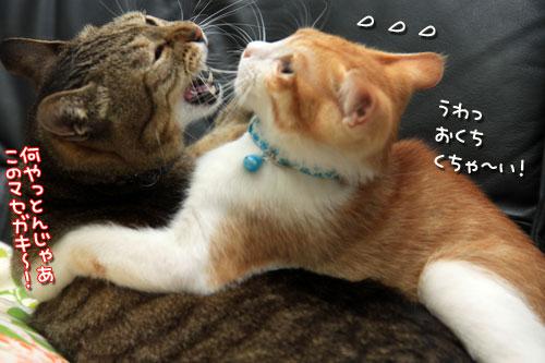 なんじゃわれー!