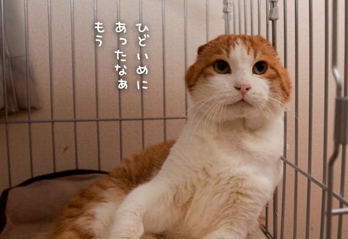 きみはほんとに猫か?