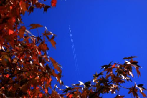 飛行機と雲ともみじ