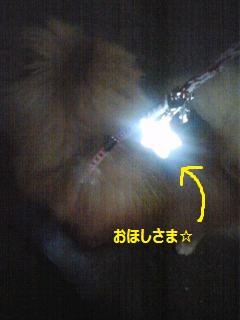 110825maplelight2.jpg