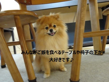 110904maple2.jpg