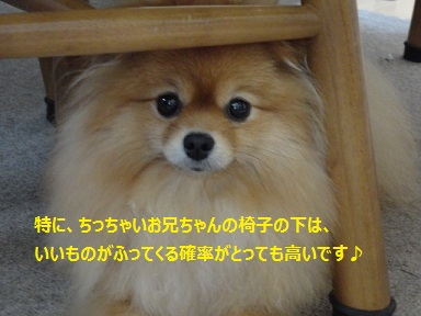 110904maple3.jpg
