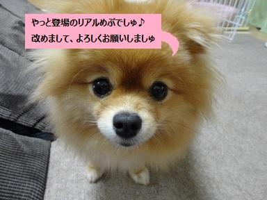 110907maple3.jpg