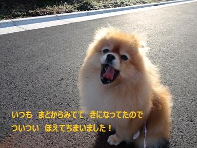 111124maple2.jpg