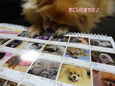 111218maple10.jpg