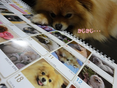 111218maple9.jpg