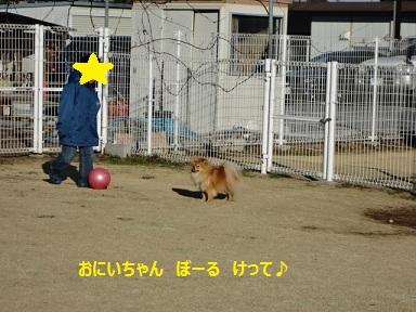 120109maple4.jpg