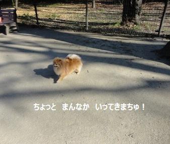 120115maple11.jpg