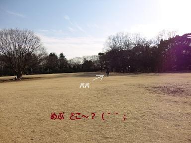 120226maple11.jpg