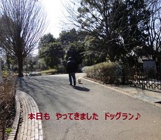 120307maple1.jpg