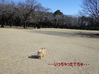 120307maple13.jpg