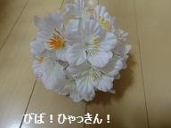 120429maple3.jpg