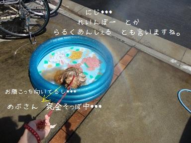 120805maple3.jpg