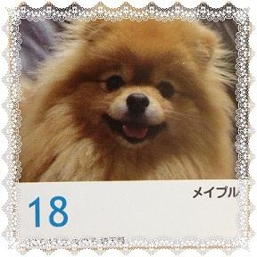 121216maple4.jpg