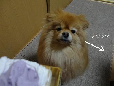 121224maple3.jpg