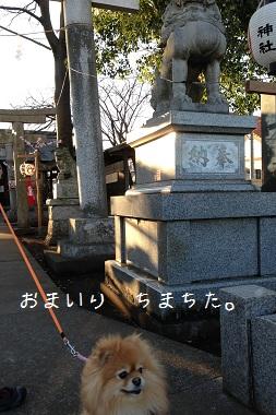 130102maple5.jpg