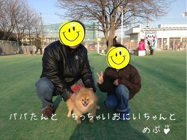 130105maple5a.jpg