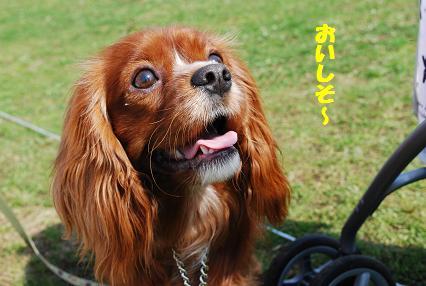 DSC_0329 1111めいちゃん