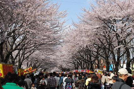 DSC_0832 1111桜まつり
