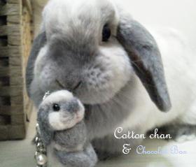 cottonちゃん2ショット