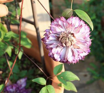 20091107garden_5.jpg
